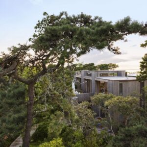 growing home the trees making a statement in top architecture
