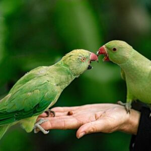 a beginners guide to learn how to take care of your pet bird