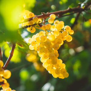 the master of wines guide to spotting a stand out chardonnay