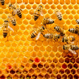 do you want to become a beekeeper heres some important advice