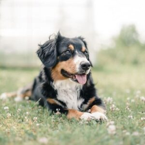 what you should know about cbd oil for dogs