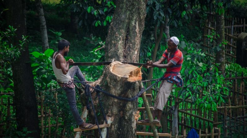 how deforestation influences our lives and what could we do to fight it