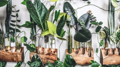 the best house plants for a stylish and healthy home