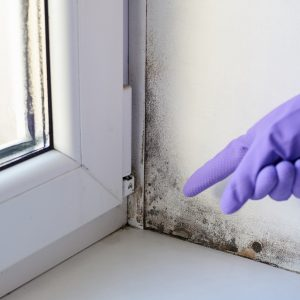 the clear signs that indicate the need of a damp treatment